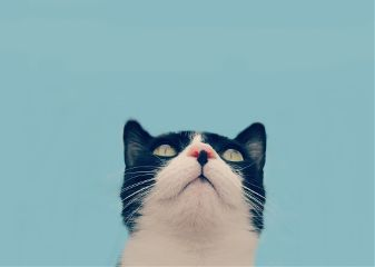 freetoedit petsandanimals mypet cats cute