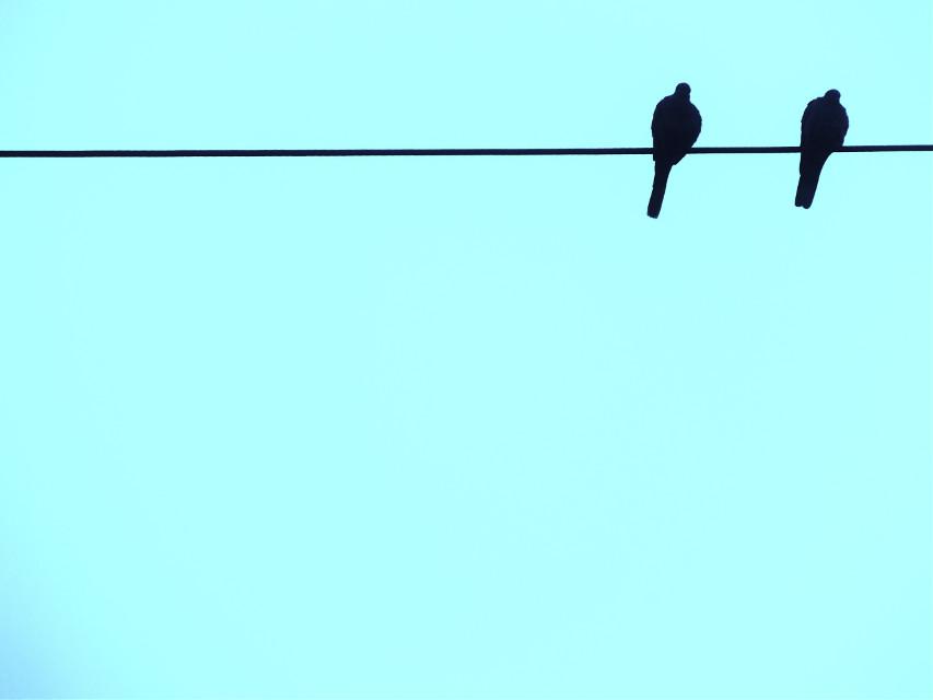#FreeToEdit  #birdsonwire #birdsonawire #birds #birdsphotography #sky #minimal #minimalism #minimalist #minimalistic