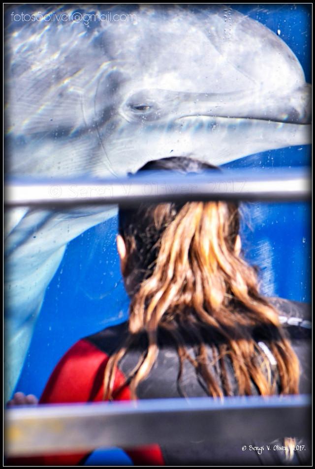 The Oceanogràfic (València, Spain): Dolphin show.   #photography #animals  #dolphins #show #dolphinarium #oceanografic #valencia