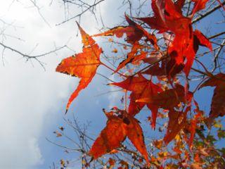 travel lifeisbeautiful beautiful fall