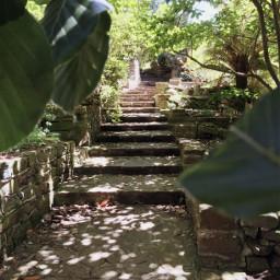 tasmania nature steps stairs photography freetoedit