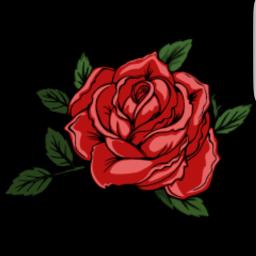 rose flower beautiful freetoedit liamausii