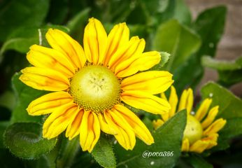 colorful emotions photography flower macro