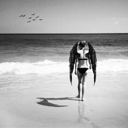 wanderer free wings ocean picsart