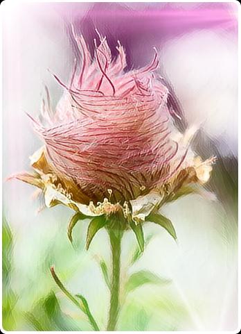 freetoedit flower picsart efects