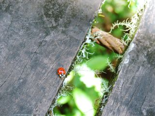 photography ladybugs ladybird nature naturelover