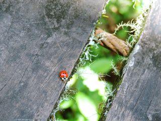 photography ladybugs ladybird nature naturelover