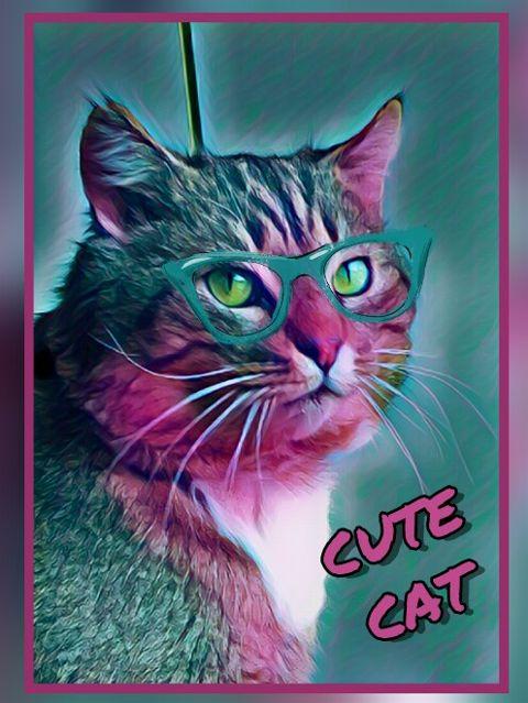 cute cat photography