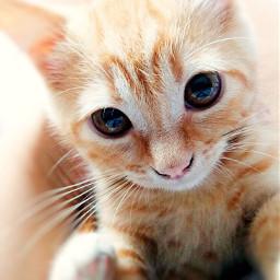 cat cats catstagram cats_of_instagram catsofworld