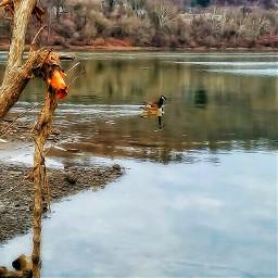 naturephotography oilpaintingeffect waterreflection crispdetails riverscene