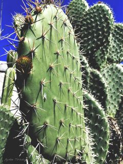 plants green colorful sunny cactus