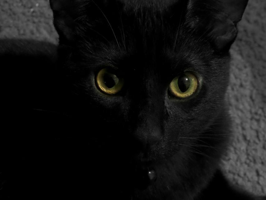 #blackcat #blackandwhite #bw #black #cat #kitty #jinx #jinxthecat #colorsplash #furbabyson #furbaby #furbabyselfie #cute #angry #FreeToEdit