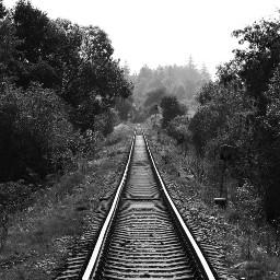 freetoedit remixit photography photo blackandwhite