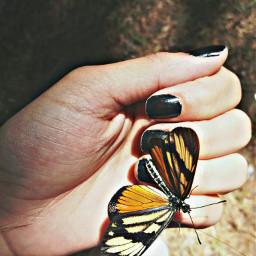 goodtrip butterfly freetoedit