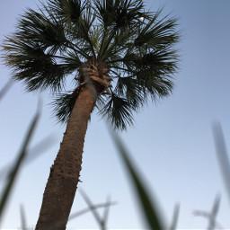freetoedit palmtrees fun almostspringbreak