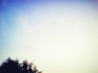 freetoedit light tree heaven minimal