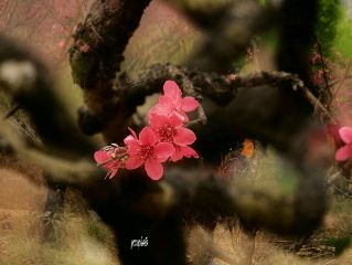 flowers springtime spring#photography nature#plumblossom spring