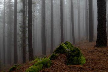 landscape forest fog nature freetoedit