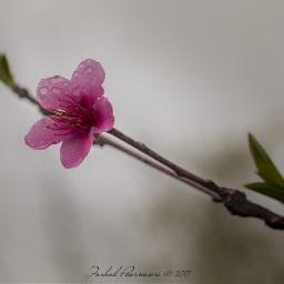 spring guilan iran rasht رشت freetoedit