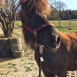 isilove m pony isi horse