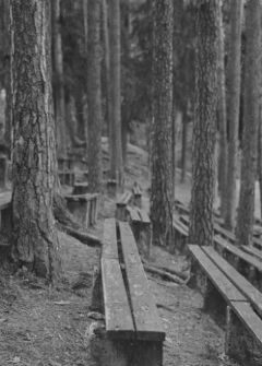 bench forest
