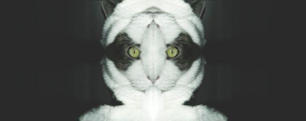 freetoedit mirrored catsphotography artistic catselfie